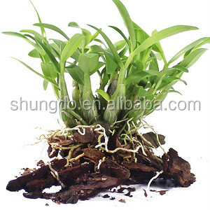 Dendrobe Extract Dendrobium nobile Lindl Dendrobine