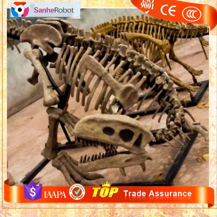 Lifesize High Replica Dinosaur Fossil Craft 3M Gasosaurus