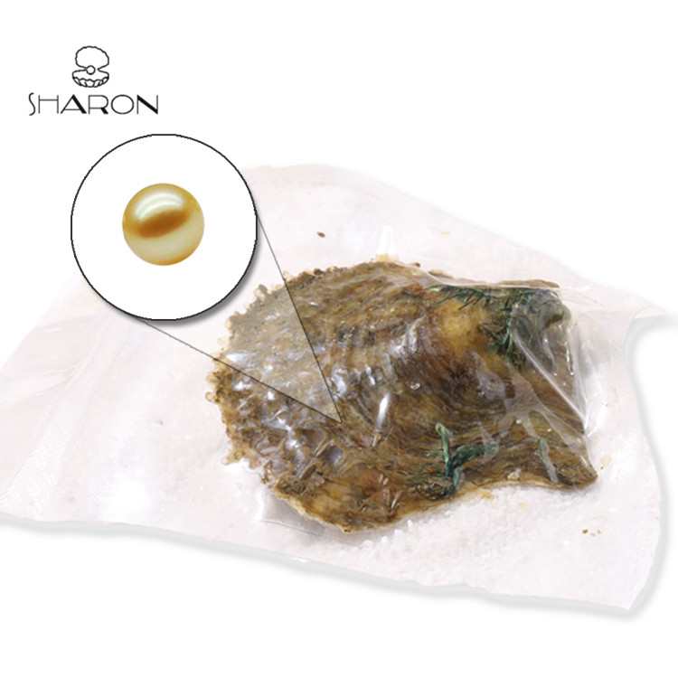 Sharon Wholesale 6-7mm Vacuum-packed Special color South sea Gold Akoya Pearl Oyster For Charm Jewelry