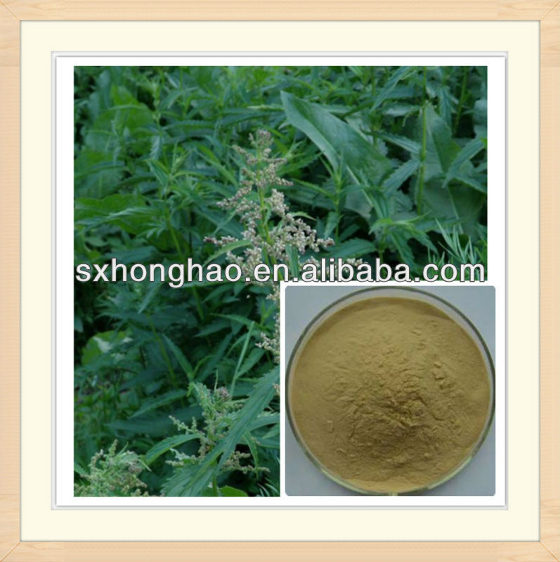 Natural Beta-sitosterol Nettle Leaf Extract