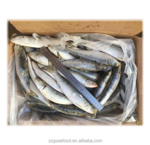 60-70pcs/ctn frozen sardine fish whole round