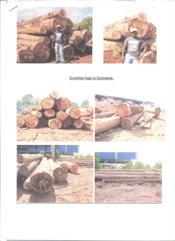 Tropical Hardwood Logs, Gronfolo