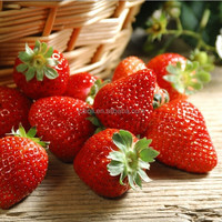 frozen sweet strawberries exporter