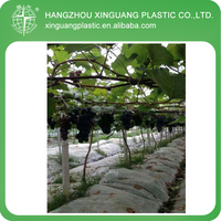 Plastic Factory Sale Agriculture Greenhouse Polyethylene