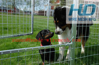 wire mesh fence for dog
