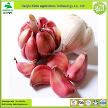 Manufacture price new fresh natural organic Violet garlic