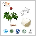 ginseng extract pharmaceutical / organic ginseng extract