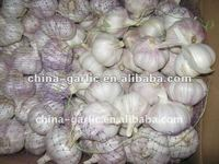Export 2012' Chinese Fruits and Vegetables ( Fresh Garlic / Ginger / Apple )
