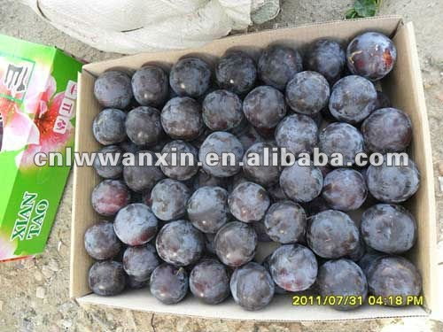 chinese fresh plum