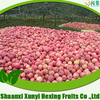 factory directly supply high quality fuji fresh apple