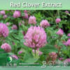 Red Clover Flower Extract Isoflavones,2.5%~40% Total Isoflavones Powder, Red Clover P.E.