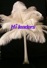 Decorative Ostrich Feather