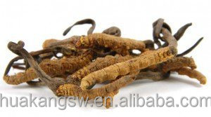 100% Pure Cordyceps Sinensis Mushroom Extract 20:1 Powerful Superfood