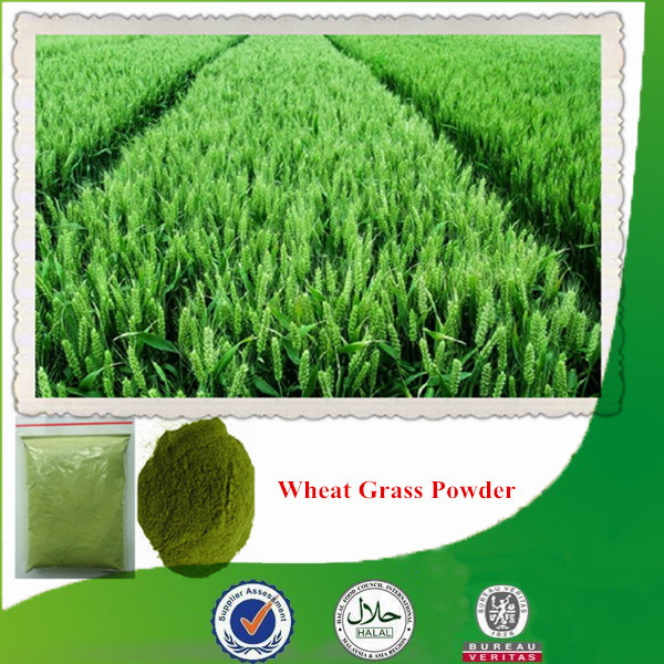 Natural & organic wheat grass juice powder with high quality