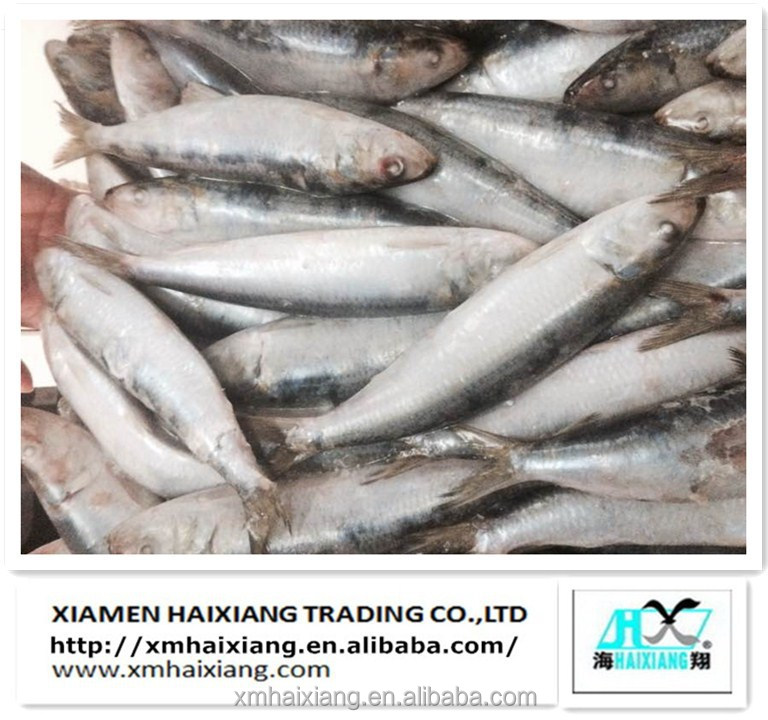 Wholesale Frozen sardine price