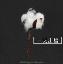 High quality White natural Cotton boll stem Original Supplier in China