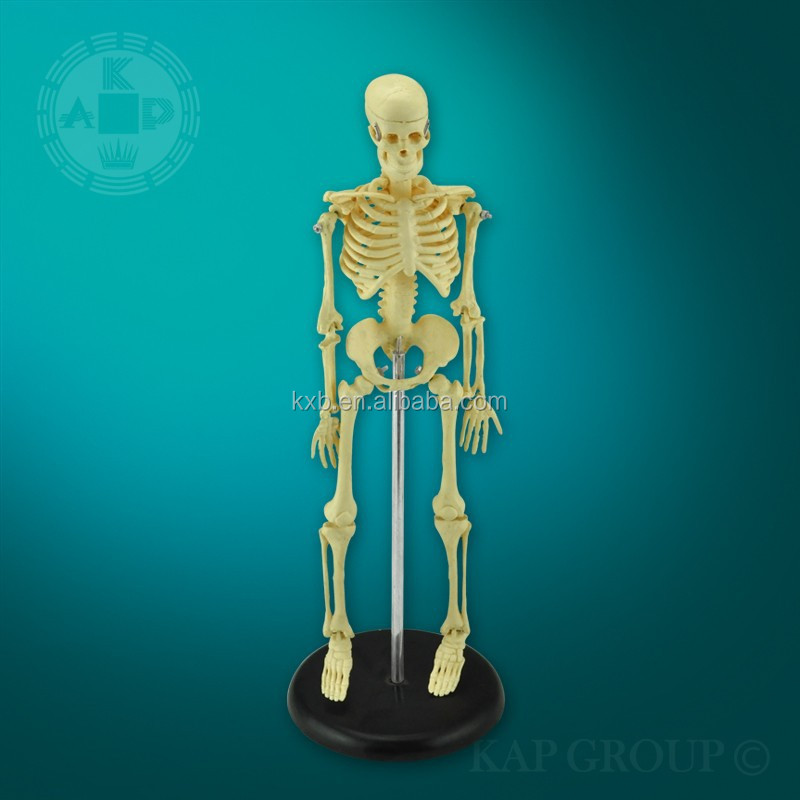 Medical mini skeleton/fake skeleton model/artificial skeleton model
