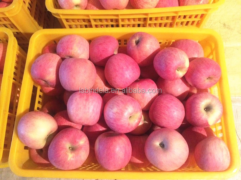 Fresh fruits Red sweet delicious paper bagged Fuji apple with good quality for sale