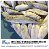 China origin best horse mackerel frozen fish with low price
