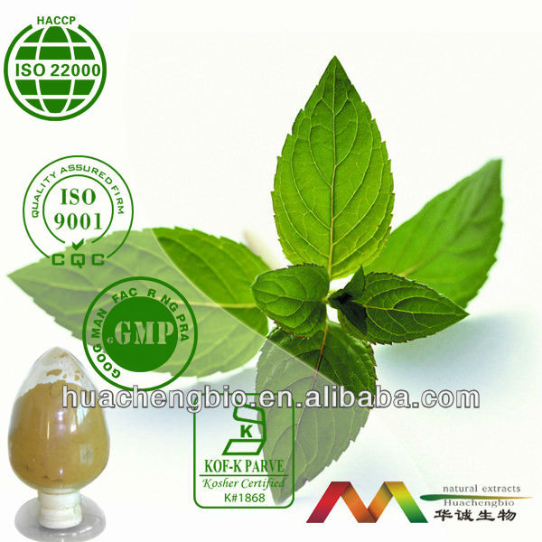 Natural 5%~10% Menthol Peppermint Extract