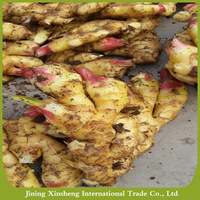 2016 agricultural crops fresh ginger for exporting sale