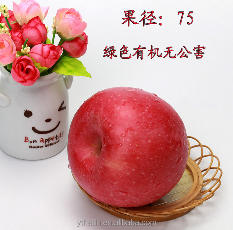 Chinese Fuji apple fresh apple fresh fruit with low price