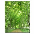 Home Decoration Forest Canvas Wall Art Landscape Painting Pictures Giclee Print on Canvas