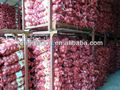 Fresh Red Onions,High Quality,Competitive Price