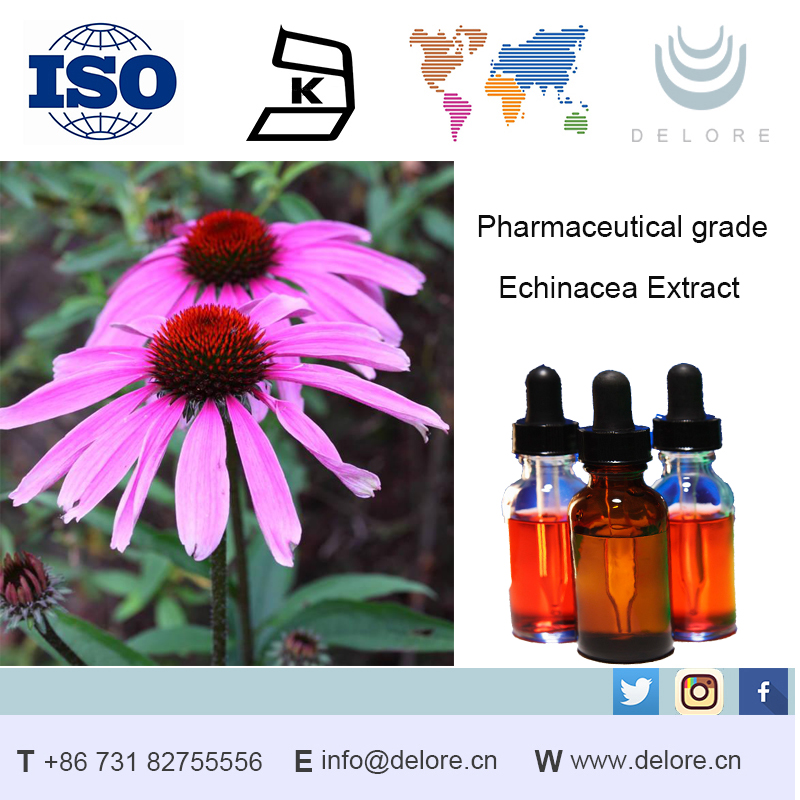 High Quality 2%~4% Cichoric Acid ,Cichoric Acid Extract,Cichoric Acid Echinacea Purpurea Extract