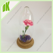 With custom size woodbase glass dome display****Tiny real seahorse&Terrarium transparent Mini glass display