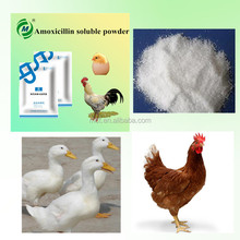 Poultry Intestinal Infection Medicine Amoxicillin Soluble Powder