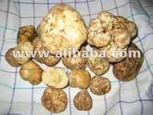 White truffles - BEST QUALITY