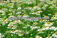 Hot sale Chamomile Extract