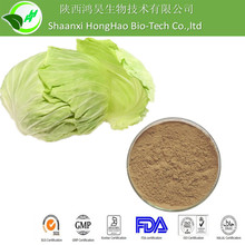 High Quality Cabbage Concentrate Juice Powder/ Cabbage Concentrate Powder