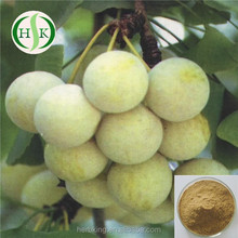 Free Sample Natural Ginkgo nut Extract