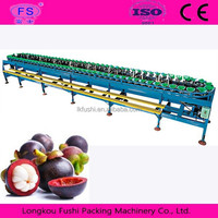 Manggis sorting machine