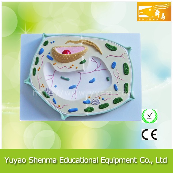 Lab and school equipment supplier anatomical model Plant cell model