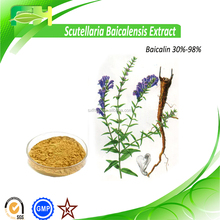Lower Blood Augar Radix Scutellariae Extract, Baical Skullcap Root Extract, Scutellaria Extract Powder