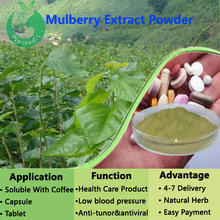 Mulberry Extract/White Mulberry Powder/Mulberry Leaf Extract