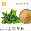 Kosher HACCP FDA cGMP weight losing product free sample 98% tea polyphenol catechins EGCG L-Theanine green tea extract