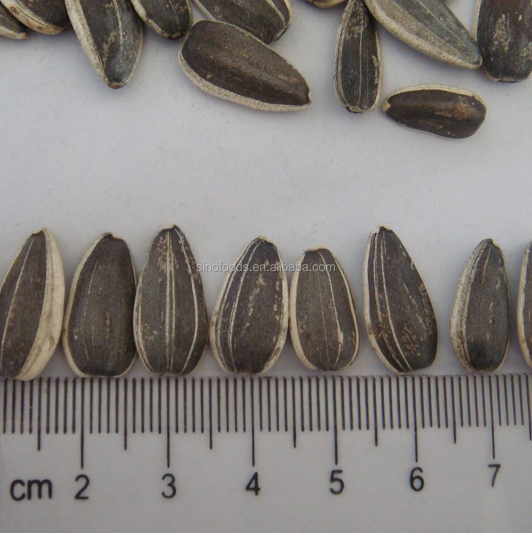 2014 new crop 909 Sunflower seeds america round type different types of sunflower seeds