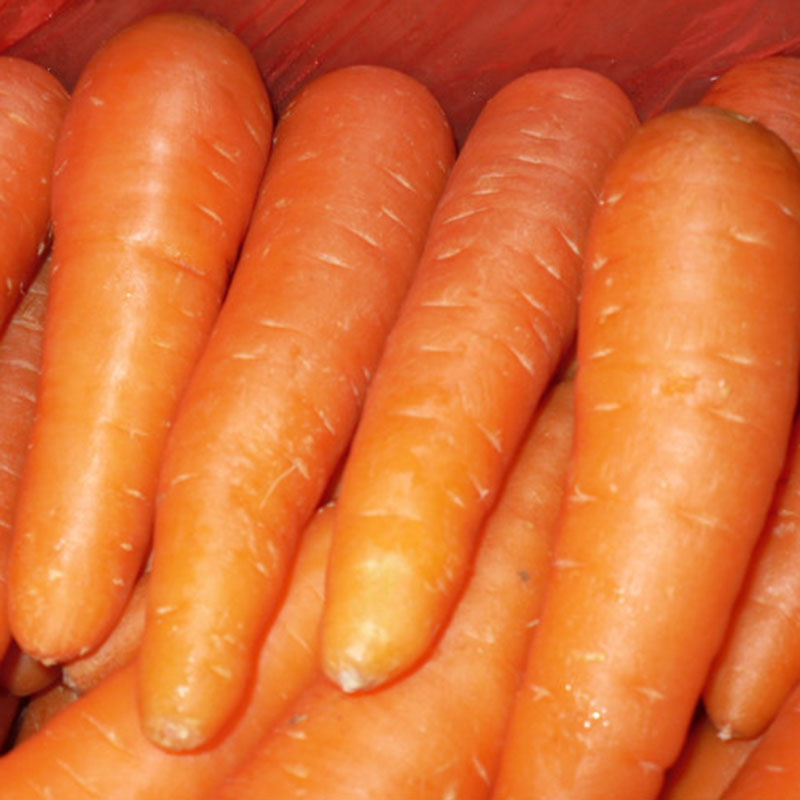 Bulk fresh carrot with low price