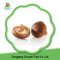 High Quality Frozen Mushroom Shiitake And Very Popular