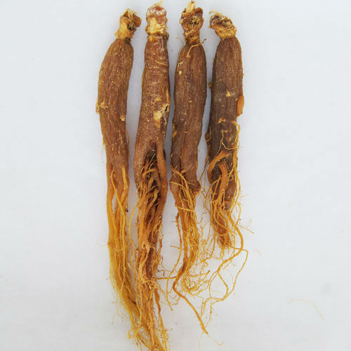Red Ginseng Root / Panax Ginseng / Ninjin / Insam with tail tonic body