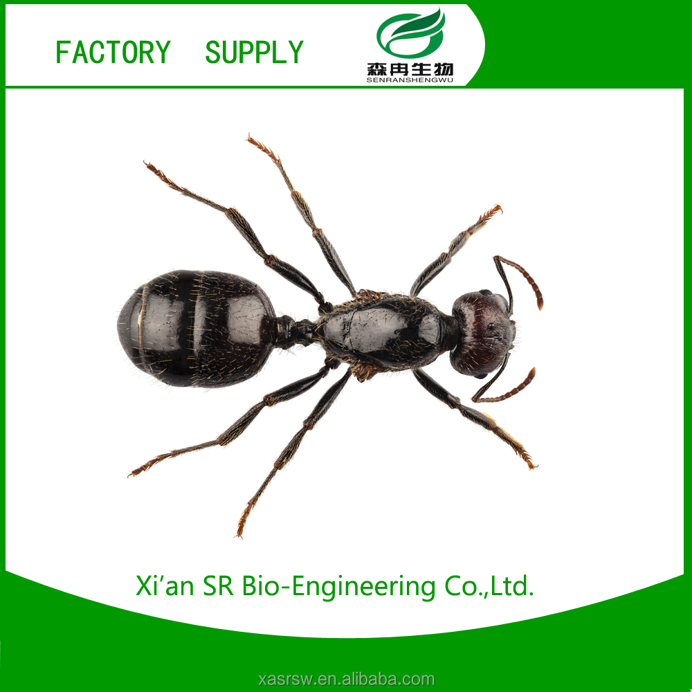 SR Increase Endurance,Anti-aging Product Black Ant Extract/polyrhachis Vicina Roger For Men's Sex