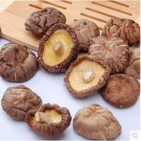 edible China 2016 dried oyster mushroom