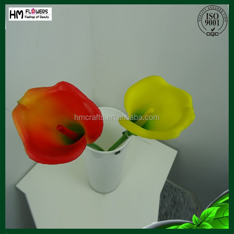 Single stem big round calla lily flower