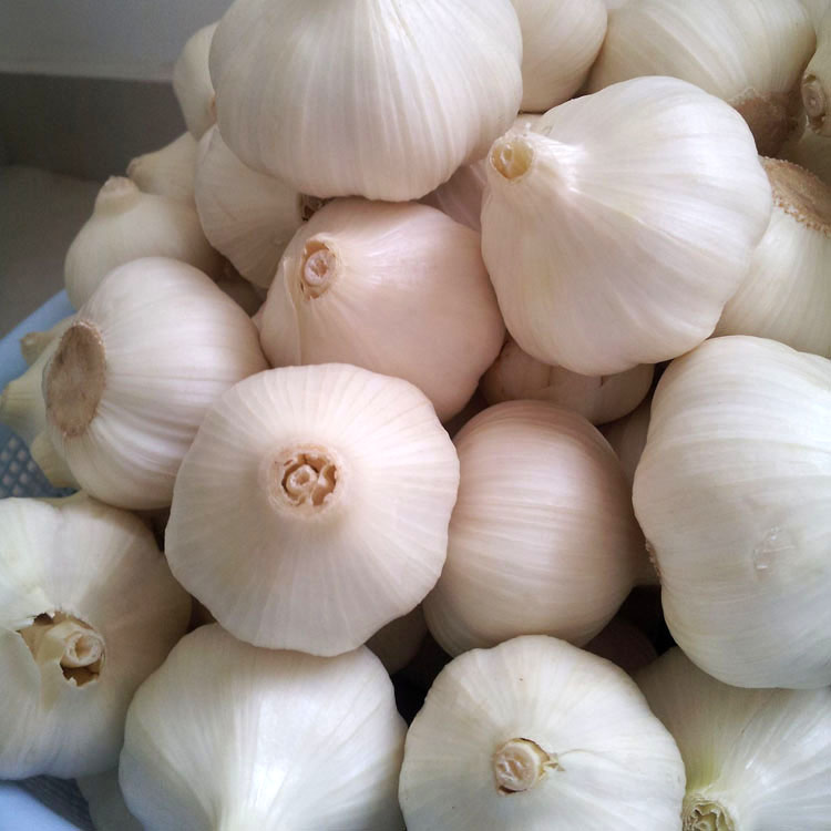 China Good Farmer Organic Male Garlic