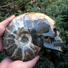Amazing hand carved Natural Ammonites skulls conch Fossil stone Crystal Skulls