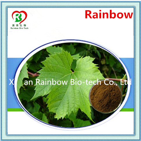 giant knotweed extract Multifunctional grape seed p.e. vitis vinifera l. grapestone extract cas no: 84929-27-1
